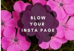 I will professionally manage your instagram account